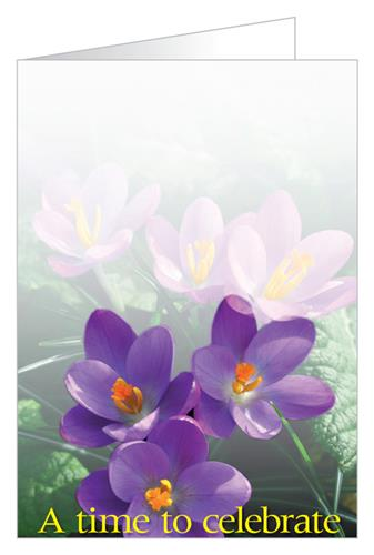 A time to celebrate (Crocus)