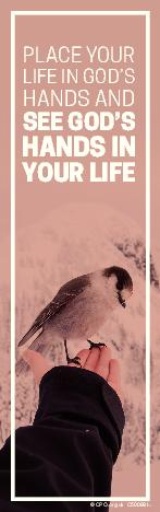 Wise Words Bird
